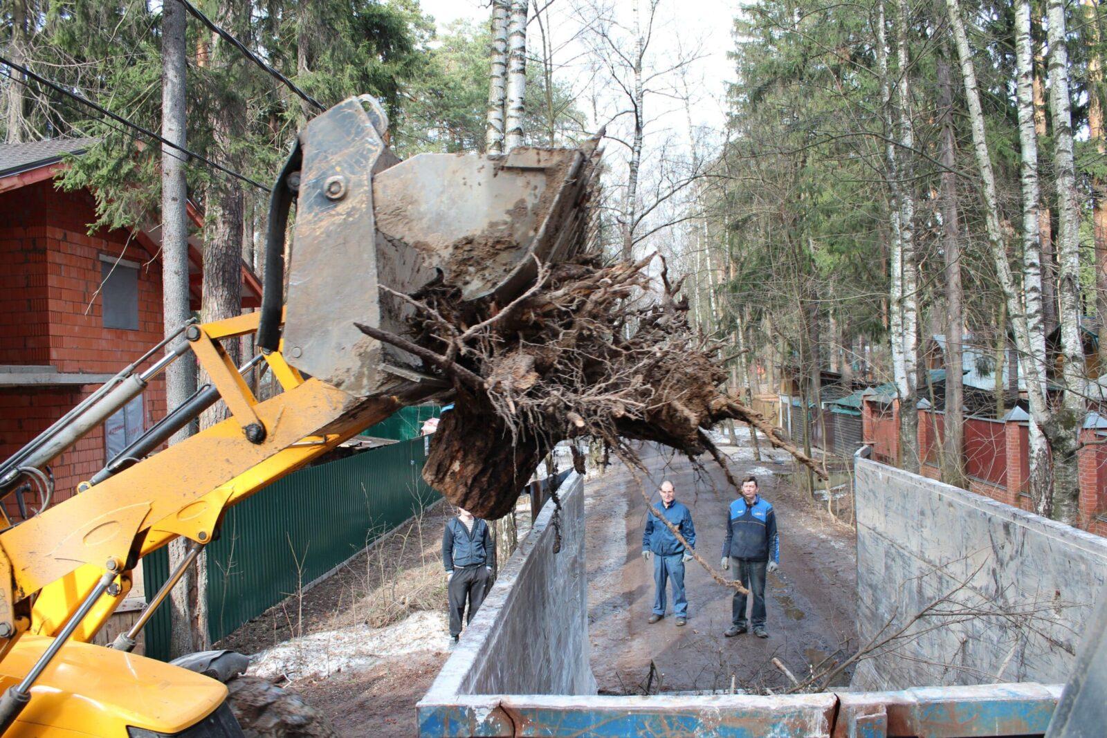 Изображение Вывоз спиленных деревьев с участка