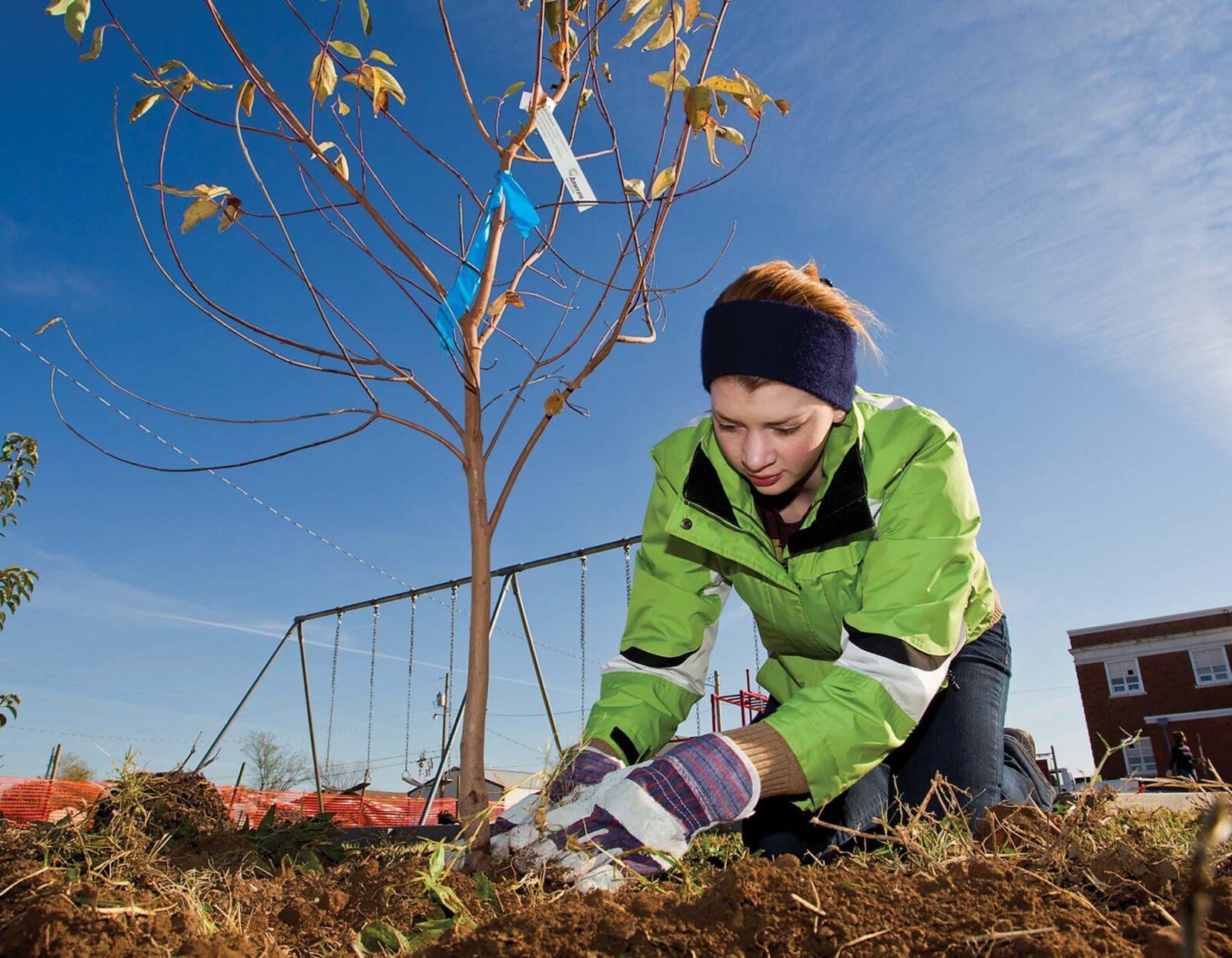 Изображение Посадка деревьев