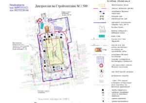 Dendroplan gorizontalnyy 4 min 300x212 - Разработка дендроплана и перечетной ведомости