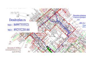 Dendroplan gorizontalnyy 6 min 300x212 - Разработка дендроплана и перечетной ведомости