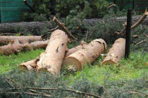 img 8493 300x200 - Расчистка участка от деревьев и кустарников