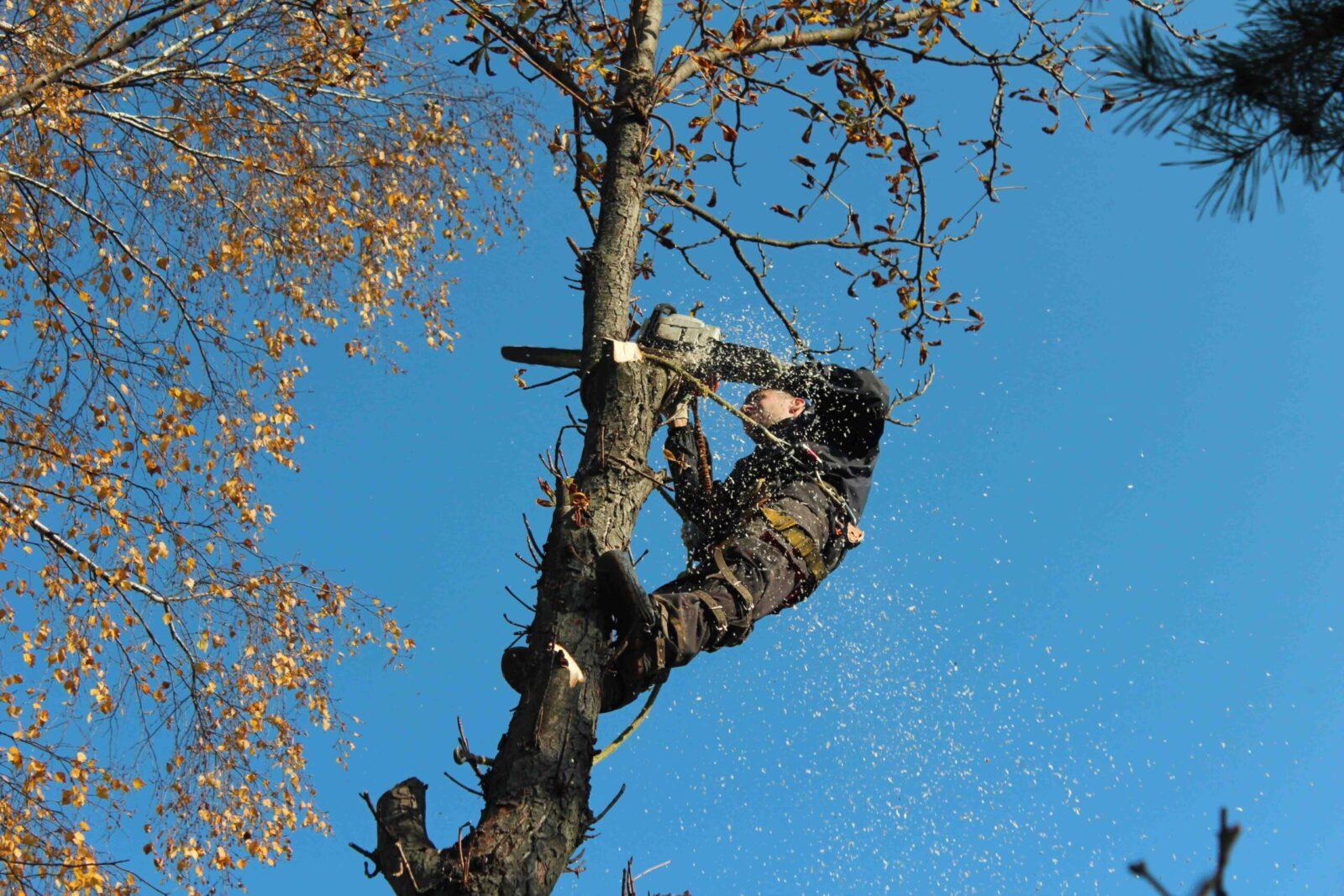 Изображение Удаление аварийных деревьев частями