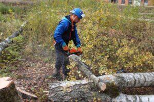 img 9536 300x200 - Расчистка участка от деревьев и кустарников