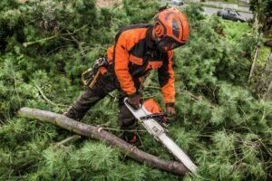 neskolko faktov o kompanii 1 3 scaled 300x200 1 - Уход за деревьями в Москве и Подмосковье