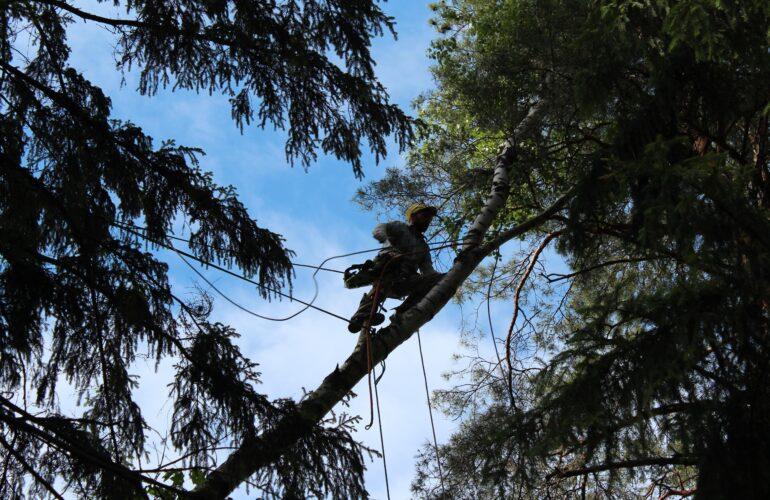 Изображение Аварийные деревья