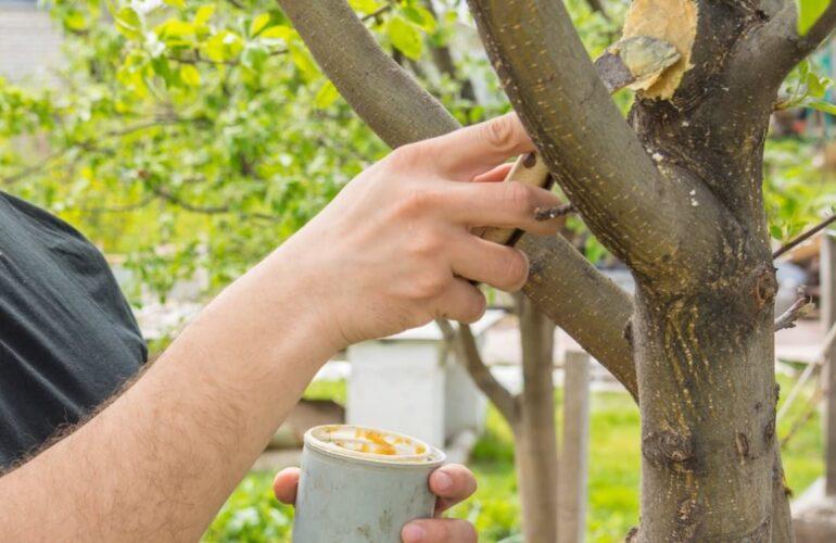 Изображение Заболевание плодовитых деревьев и их лечение