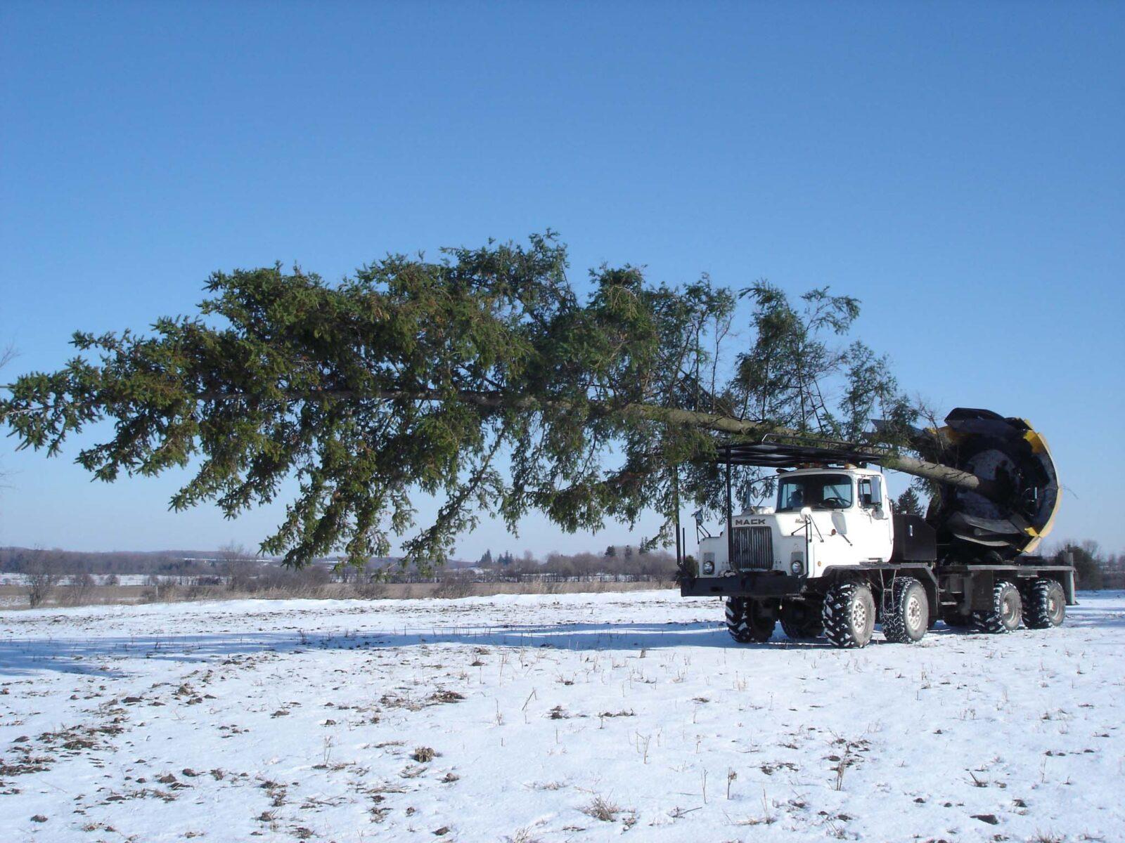 Изображение Пересадка деревьев зимой