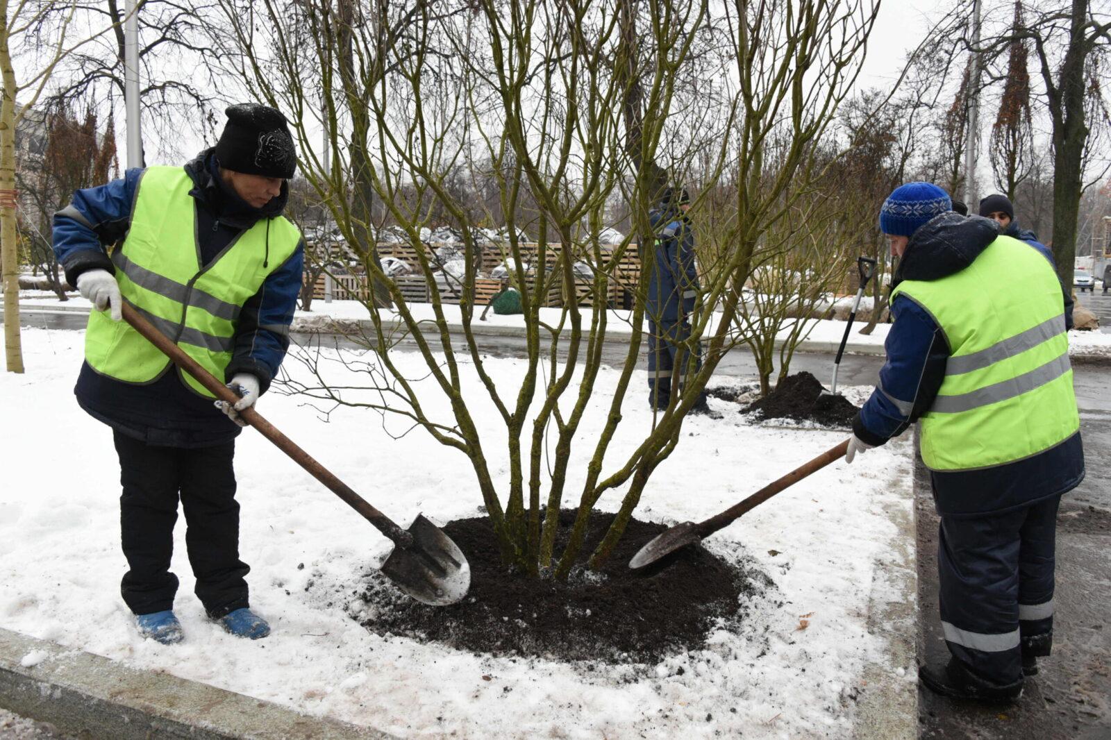 Изображение Посадка деревьев зимой