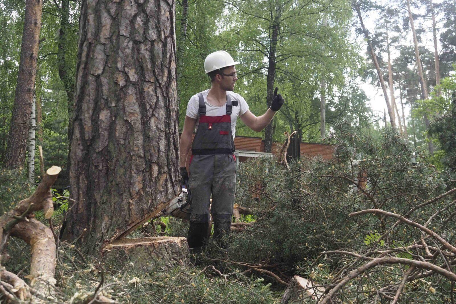 Изображение Вырубка деревьев под строительство