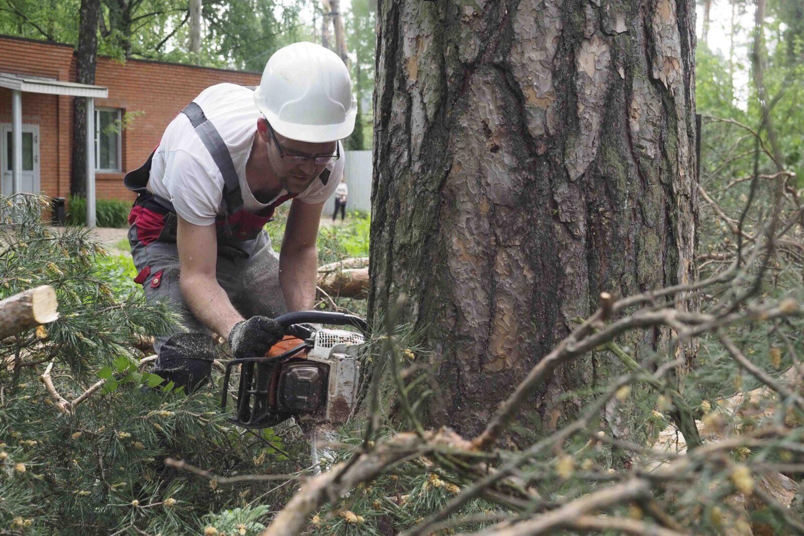 Изображение Правила вырубки и спила деревьев