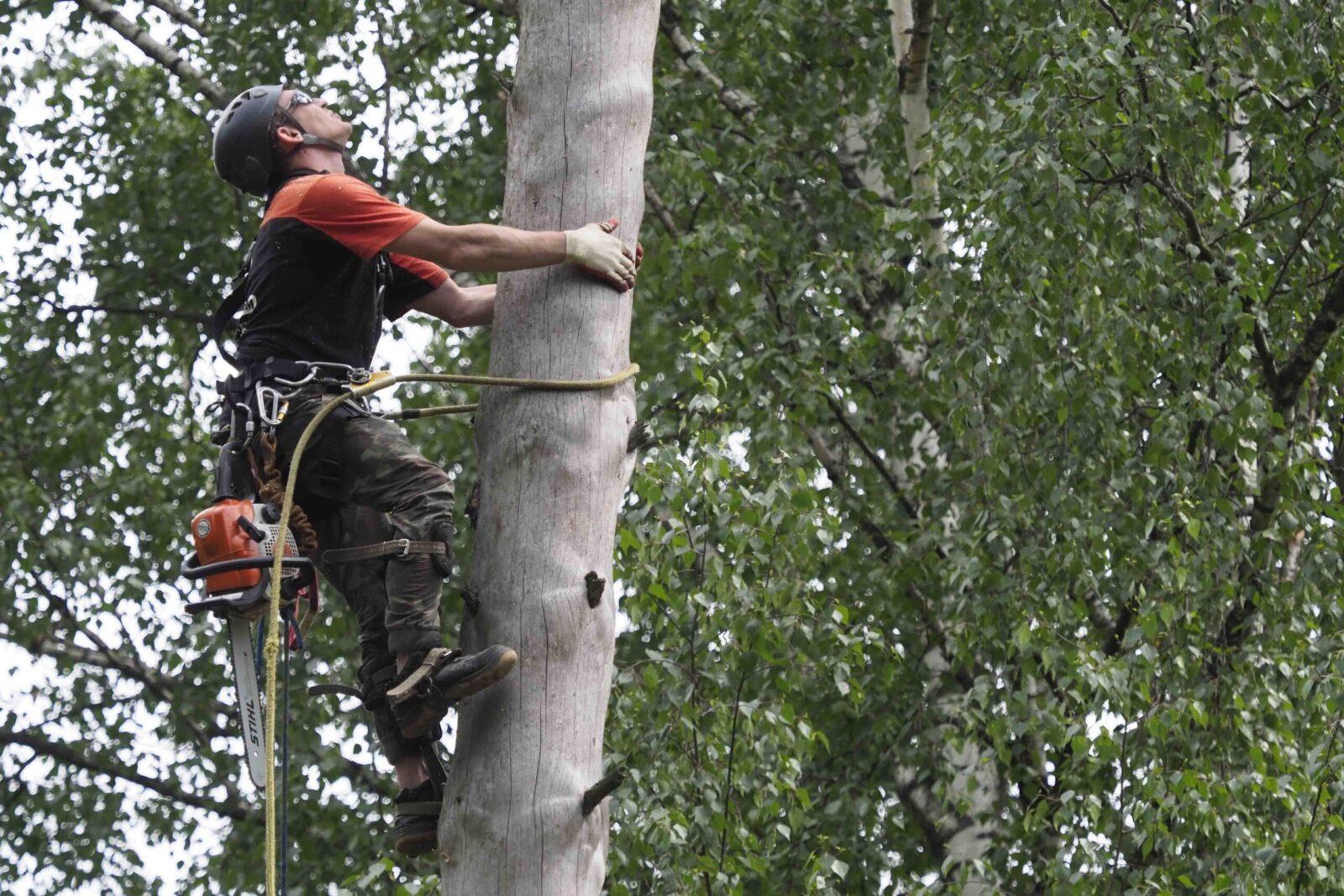 Изображение Как спилить дерево на кладбище