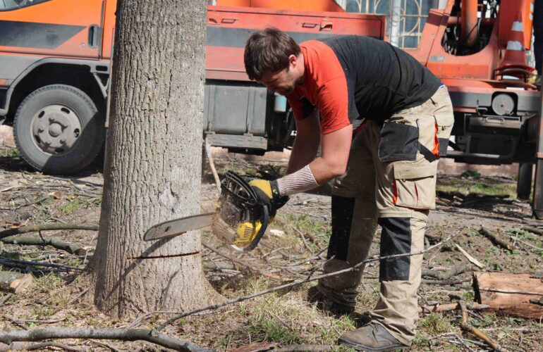 Изображение Какой штраф за спиленное дерево в Москве?