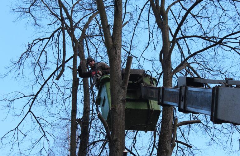 Изображение Кронирование и обрезка деревьев в Пушкино