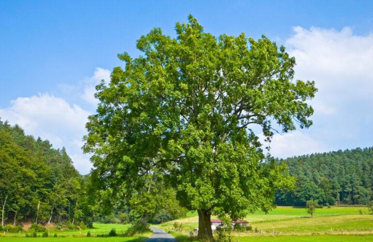 Изображение Лиственные породы деревьев