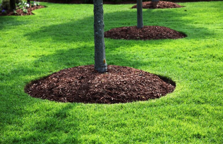 Изображение Мульчирование приствольных кругов деревьев