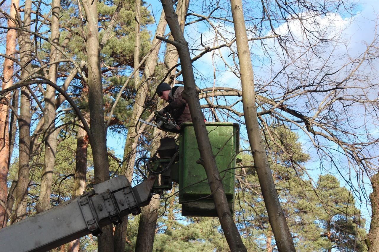 Изображение Опилка деревьев в Москве