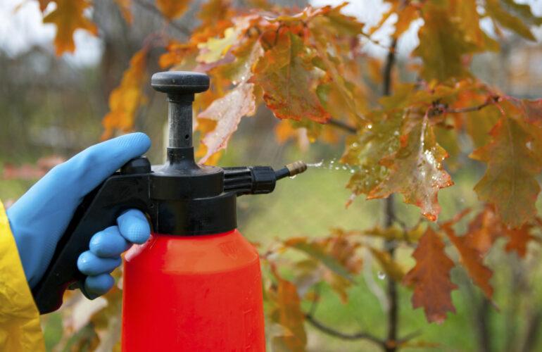 Изображение Железный купорос и его применение в садоводстве