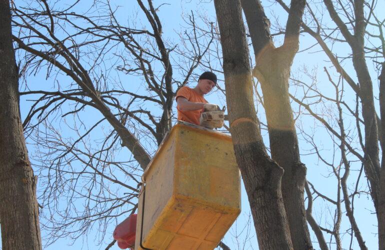 Изображение Санитарная опиловка деревьев