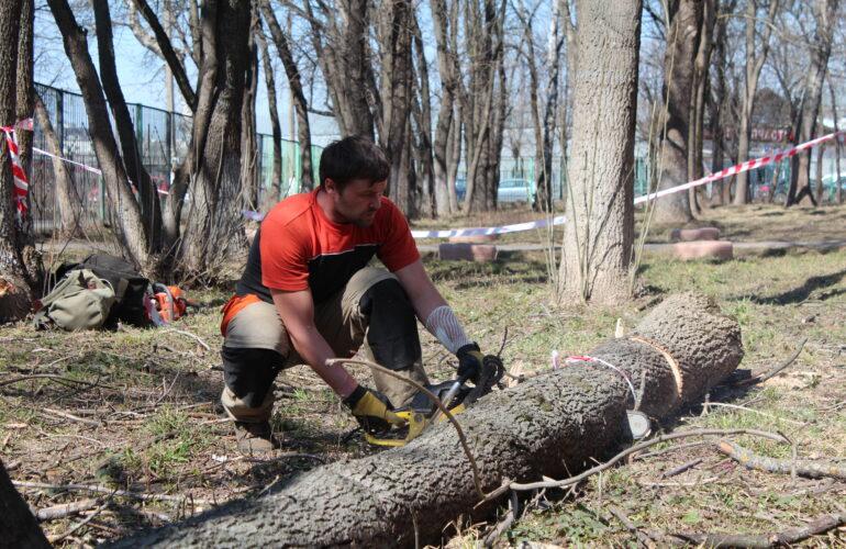 Изображение Служба вырубки деревьев в Москве и Московской области