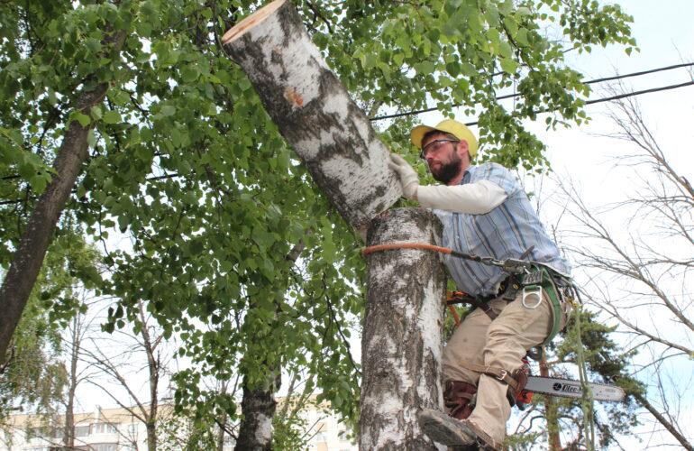 Изображение Удаление деревьев в Королёве