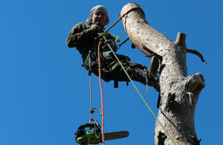 Изображение Удаление деревьев в Щёлково