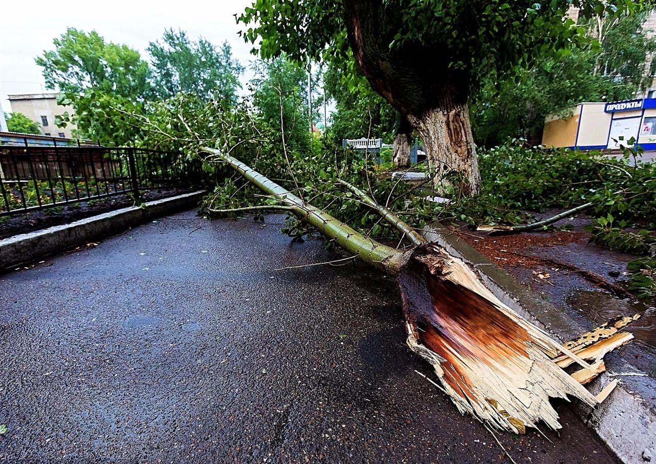 Изображение Причины падения деревьев