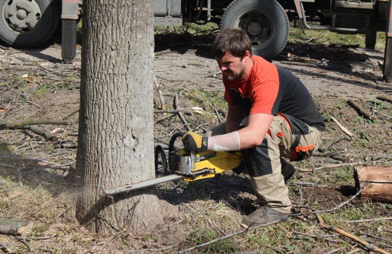 Изображение Валка дерева в сторону наклона