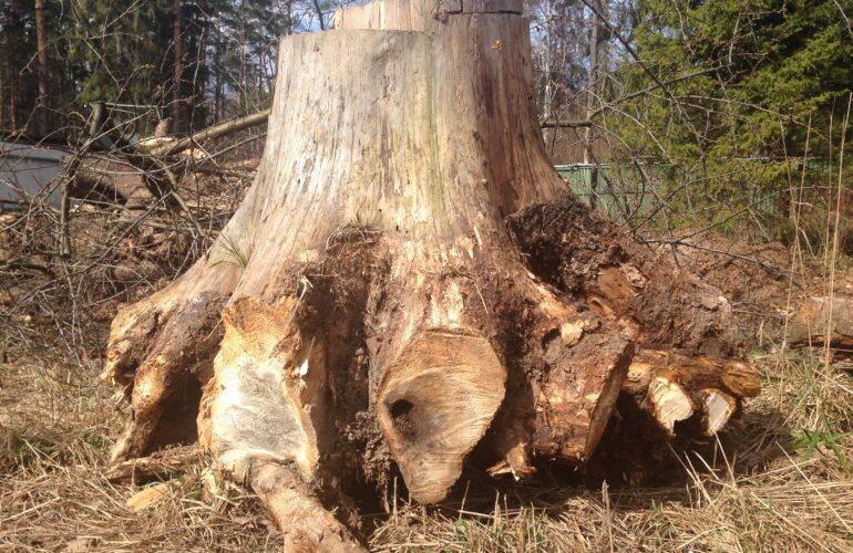 Изображение Как удалить пень от спиленного дерева